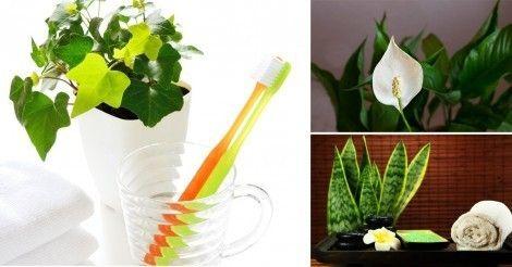 Aprende qué plantas son adecuadas para el baño para que a ningún rincón de tu hogar le falte vida.