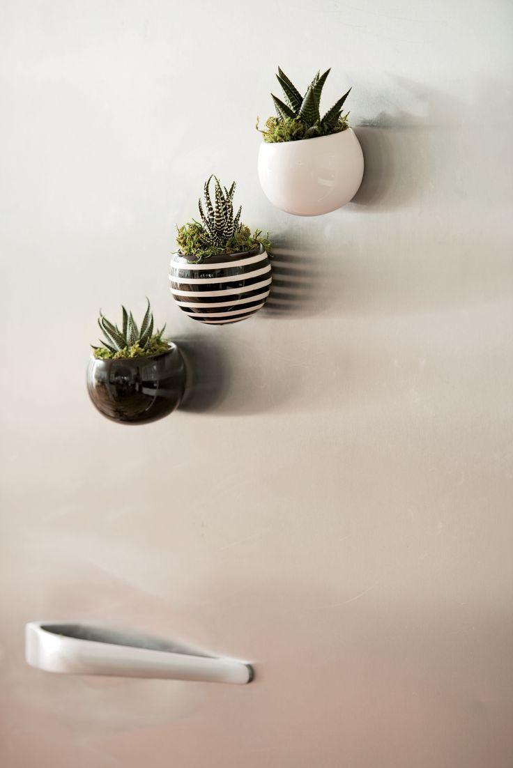 Indoor Succulent Garden: Mini Magnet Succulent Garden, Set ...