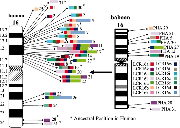Human genome research paper