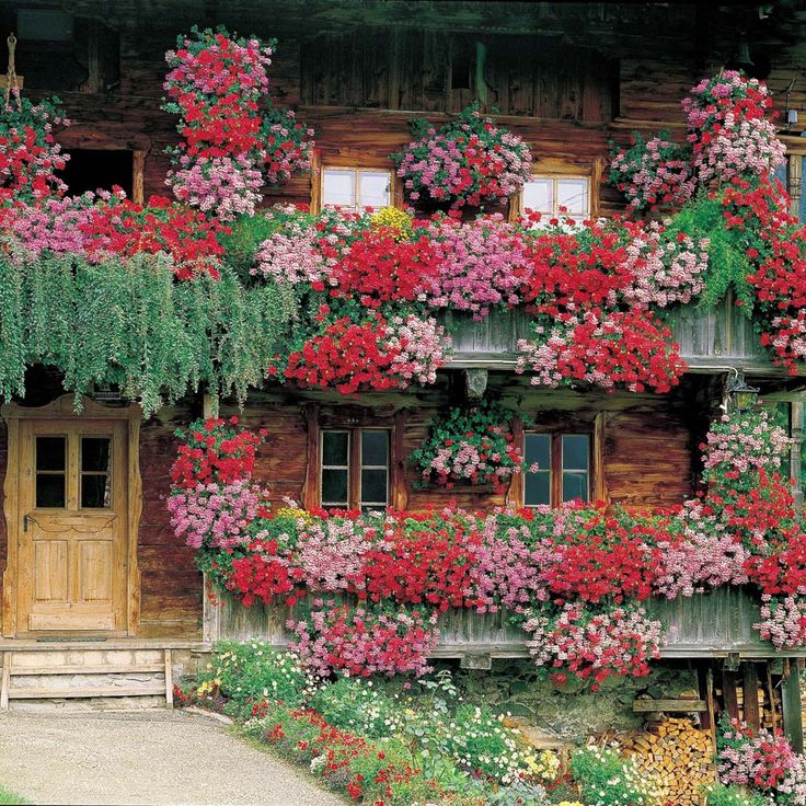 Flower Baskets For Balconies : Balcon geraniums in hanging baskets and window boxes