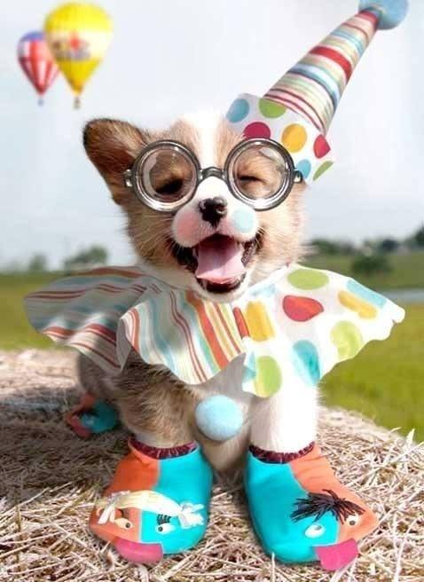 Party animal! What a cutie!!!!! <3..................www.sohana.com