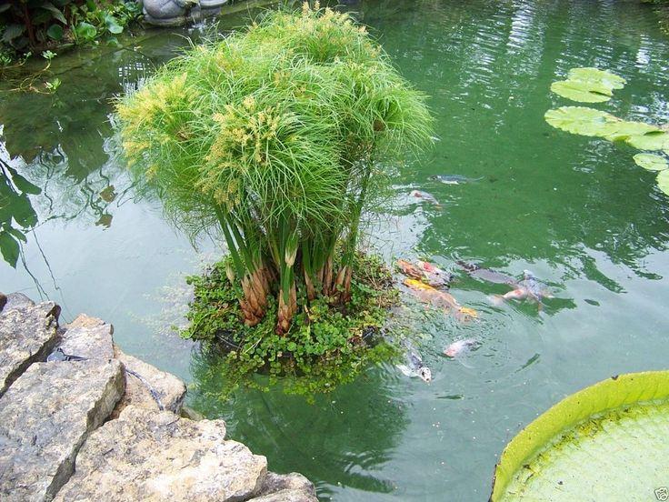 Détails Sur 24 Floating Island Pond Planter Plant Koi 400 x 300