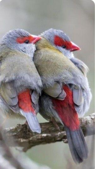 Vögel   – Vögel