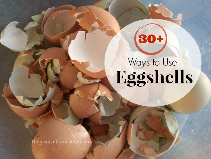 30+ ways to use eggshells!