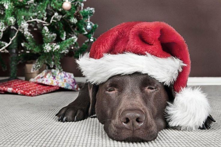 Lidské dobroty psům neprospějí, upečte jim jejich vlastní