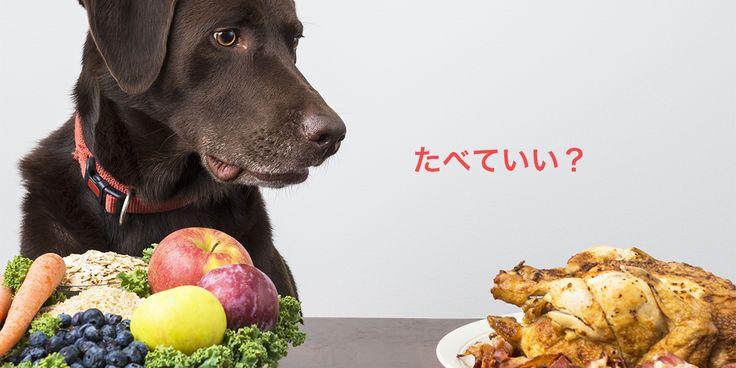 ワンコが喜ぶ秋が来た秋のリスクから愛犬を守るための7つのアドバイス
