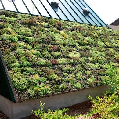 Before building a green roof, hire a certified structural engineer to determine whether your roof will support the system and plants. If it will, you're in luck. The plant life living on your roof will protect it from UV rays and other natural elements that lead to its deterioration and help extend its life.