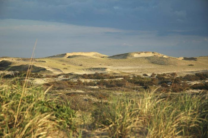Art's Dune Tours will take you on a narrated adventure through the stunning dunes around Provincetown.