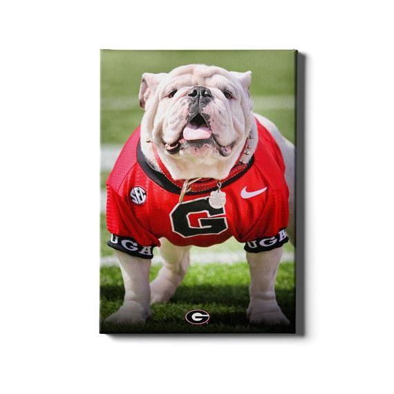 Uga Poised Ii Georgia Bulldogs Wall Art Uga X Uga Football College Mascot Sanford Stadium Georgia Football Georgia Mascot In 2020 Georgia Bulldogs Large Canvas Prints Bulldog Images