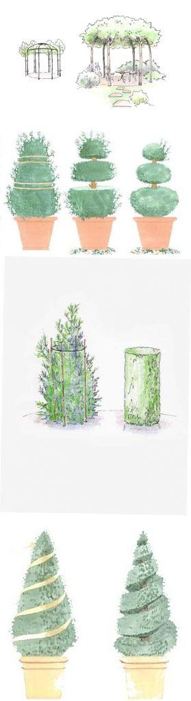 Декоративная стрижка деревьев