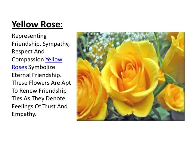 47 best yellow rose of friendship images on pinterest