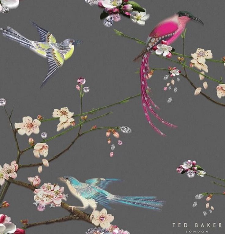 Ted Baker Flight Of The Orient Grey Ted Baker