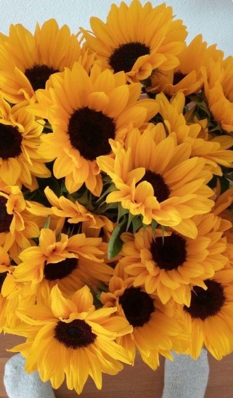 Image Result For Aesthetic Sunflower Laptop Wallpaper