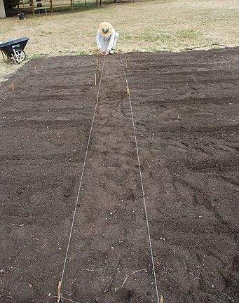Growing Vegetables Step-by-Step : How To Start A Vegetable Garden...with this step-by-step article, it's fun and easy!