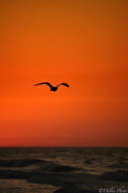 Fly By Sunrise by Debbie Photos