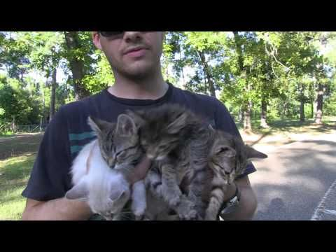 You Won't Believe What This Couple Found While Walking In The Woods! Such An Amazing Rescue — And It's All On Tape! | The Animal Rescue Site Blog