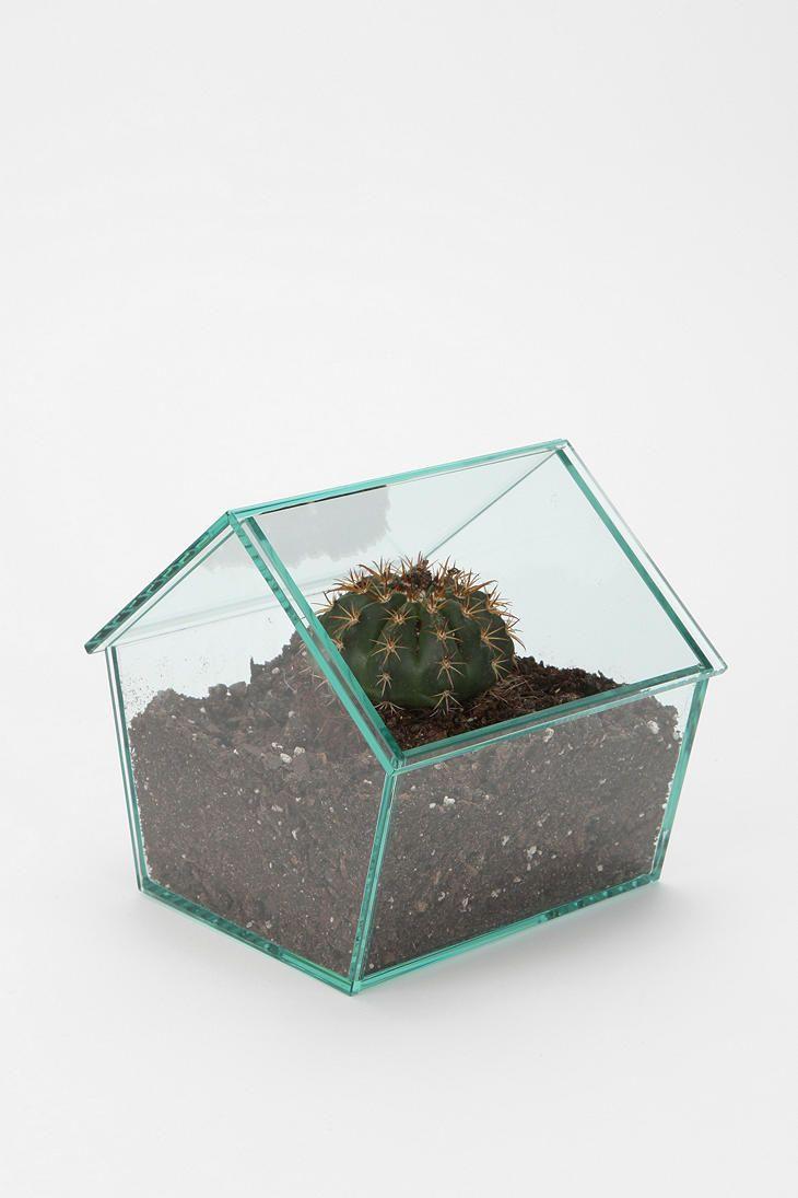 Glass House Terrarium Plants Pinterest Urban