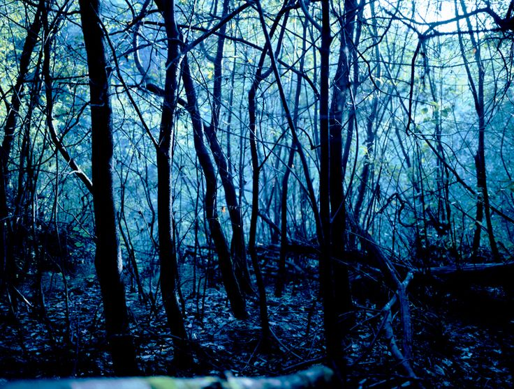 shadowlab - nature - Morten Andersen: Official Artist's Site