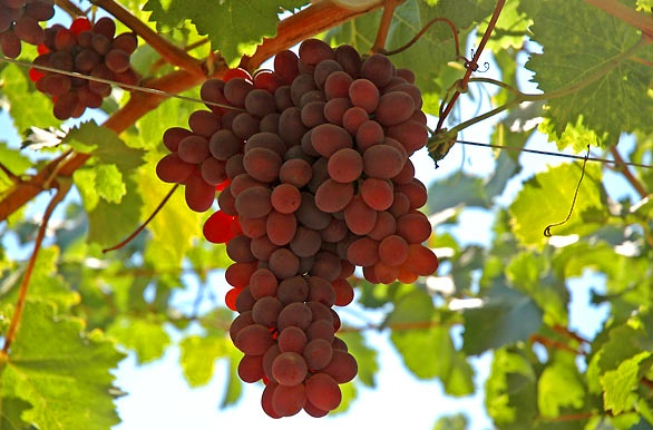 Frutos de Colchagua - Rancagua - O´Higgins - Chile #places