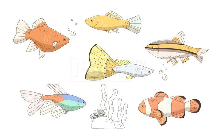 SPAI148, 프리진, 일러스트, SPAI148a, 동물, 에프지아이, 라인, 컬러풀, 컬러, 색채, 물고기, 생선, 어류, 애완동물, 반려동물, 구피, 미역, 산호, 열대어, 흰동가리,일러스트, illust, illustration #유토이미지 #프리진 #utoimage #freegine 19952192