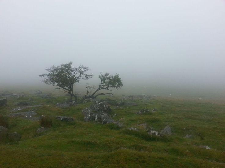 Dartmoor - další z mála fotek z túry (v tom počasí jsem se bála, že zničím foťák)