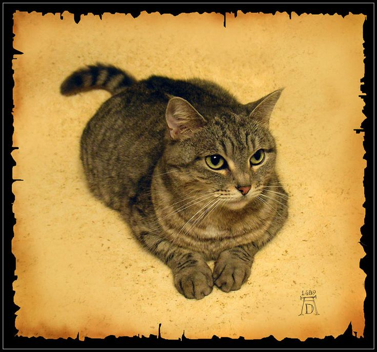 Hahah, even Dürer appreciated a good cat meme. Die Katze, 1489 - Albrecht Dürer (1471-1528 Neurenberg, Deutschland) ~Via Troy Hines