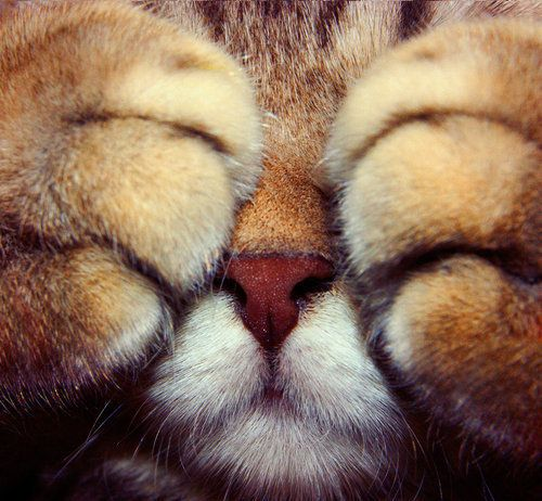 I love tigers, they are my favorite animal. So this, is so stinking adorable!!!