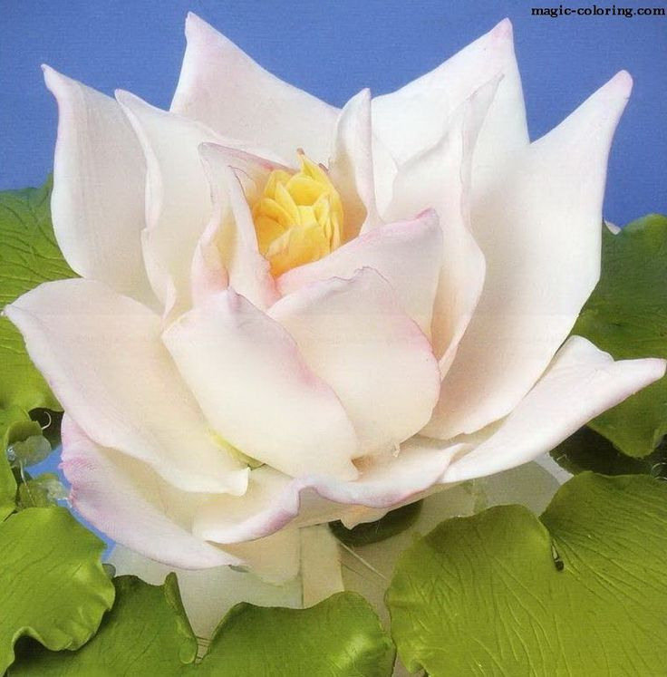 MAGIC-COLORING | Water lily flower template - водяная лилия 12