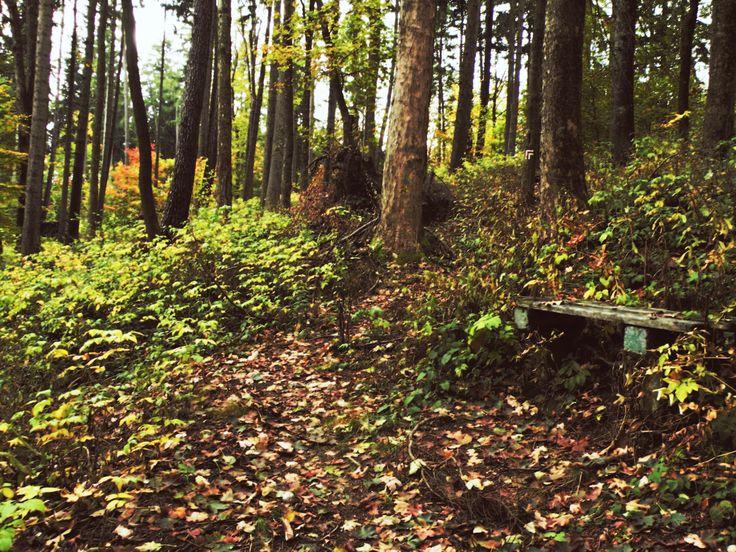 """Nine shots of autumn...  photo no.7 """"secret bench"""""""