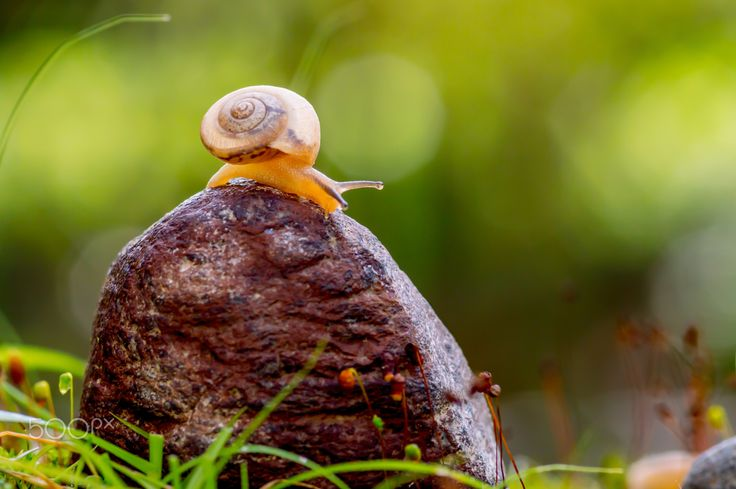 I Want to Get Off - Snail