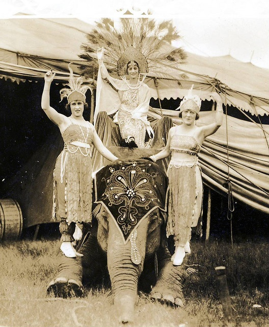Best 20 Circus Elephants Ideas On Pinterest Vintage
