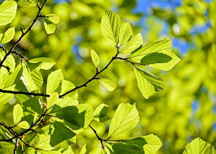 Nas diversas culturas a primavera está relacionada ao reflorecer, ao renascer da vida.