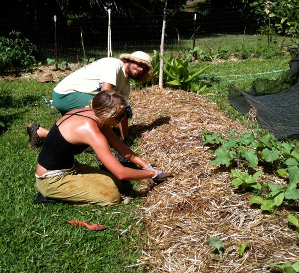 Composting tips Grow you own!: Productive Compost, Decomposition Processes, Tips Grow, Compost Gardening, Ensure Productive, Garden Pics, Composting Tips, Natural Decomposition, Green Practices