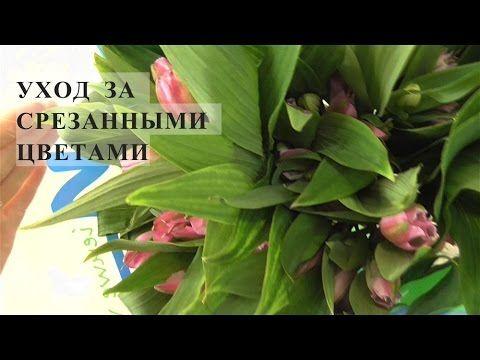 УХОД ЗА СРЕЗАННЫМИ ЦВЕТАМИ( часть 1) - YouTube