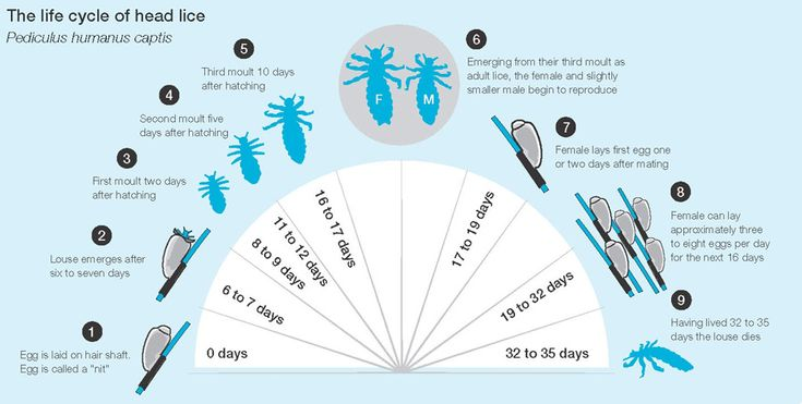 Head Lice – Pain in the Neck and Other Places