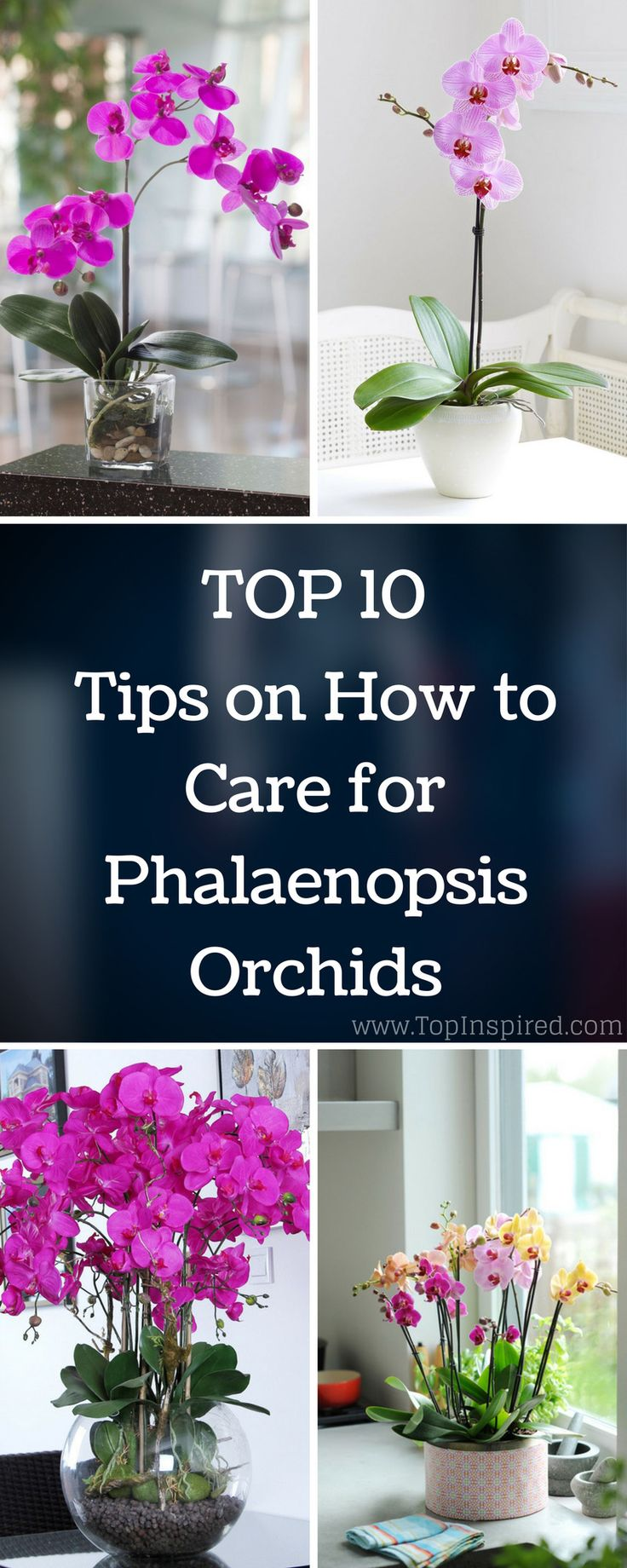 Through 10 easy tips on how to care for Phalaenopsis Orchids, you will learn…