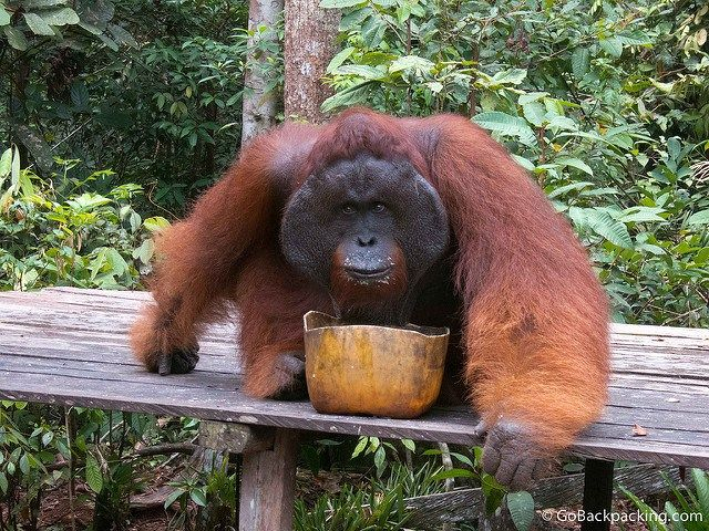4Days /3 Nights sleep on boat. Orangutan & Turtle Rescue River Boat Tour  Start / Finish: Pangkalan Bun Airport