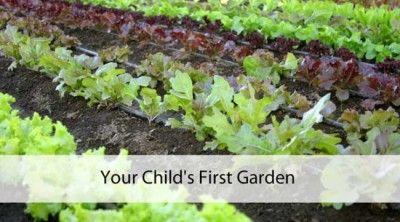Your Garden Growing Tips