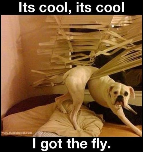 I could see Bailey doing this.