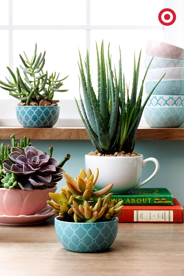 Cute mini bowls and classic mugs are unexpected ways to show off your succulents—and add a fresh, spring vibe to any room. Use them as a dinner party centerpiece, place them on a window sill, the options are endless.