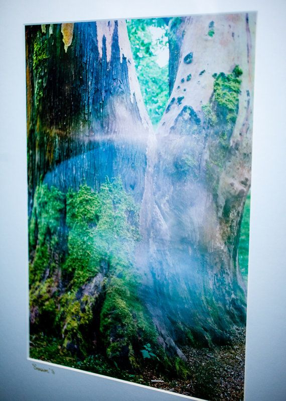 emersion matted framed analog film photograph 8x12 fine art print limited edition archival mat nature photography tree spirit