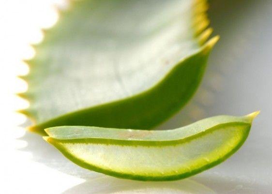 10 impieghi dell'Aloe vera per la tua #bellezza  #aloe #rimedi #cure #faidate #diy #rimedinaturali #beautyblog