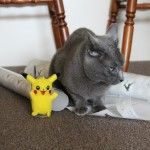 Catnapped! Smokey was taken by force TO THE VET. Then the Pikachus were breeding AND SITTING ON THE WRAPPING PAPER. http://www.darkmatterfanzine.com/dmf/the-pikachus-are-taking-over-and-smokey-is-not-impressed/ …