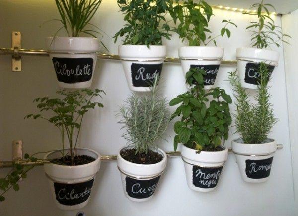 9 plantas medicinales que puedes sembrar en casa