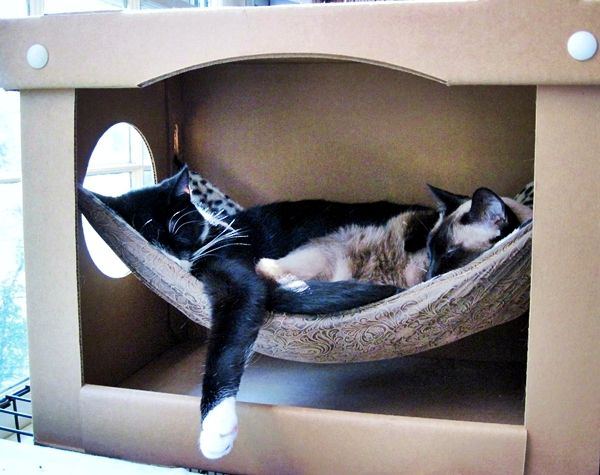 Ingenious ‪#‎hammock‬ enclosed in a sturdy cardboard box. Take a look at 10 pet hammock ideas at: http://impressivemagazine.com/2013/07/23/10-pet-hammock-ideas/#more-12217