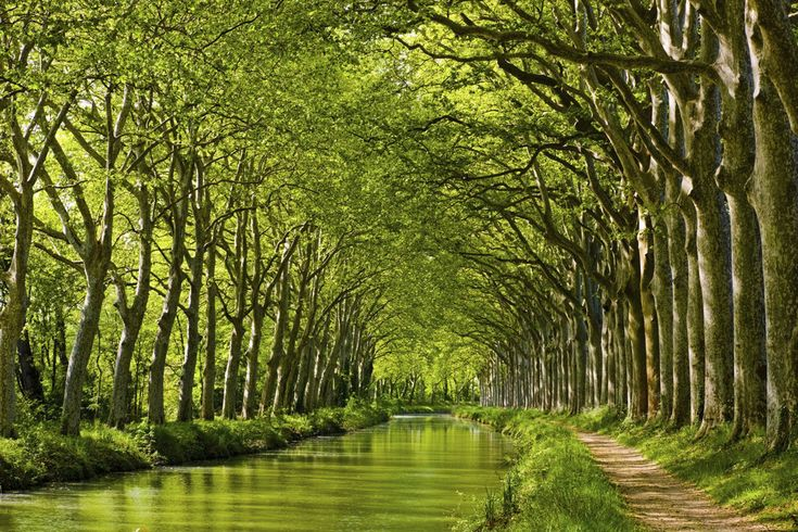 Canal du Midi - this is in France somewhere. Hauntingly beautiful.