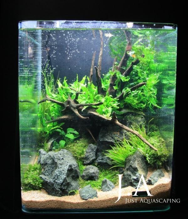 207 best images about cubes on pinterest fish tanks - Petit aquarium design ...