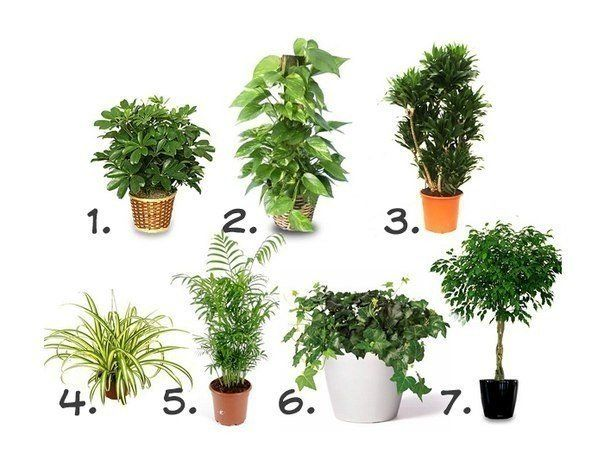 Комнатные растения, очищающие воздух. Iz-Runeta ♻️