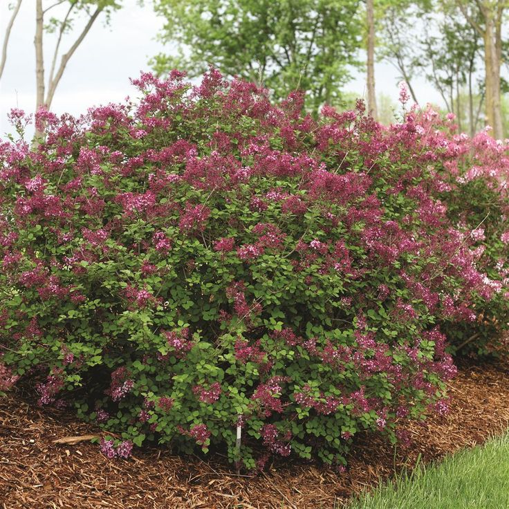 17 Best Images About New Varieties For 2014 On Pinterest