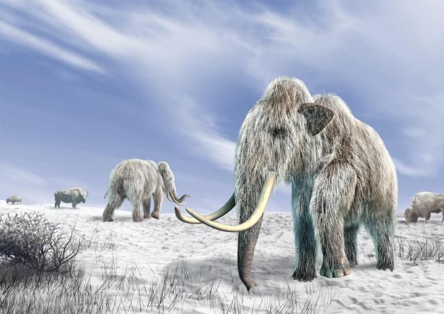 Woolly Mammoth- The Pleistocene Pachyderm:  It wasn't the biggest Mammuthus species, but the Woolly Mammoth is still the most famous prehistoric elephant of the Pleistocene epoch. Here are 10 facts you may or may not have known about this huge, shaggy pachyderm.